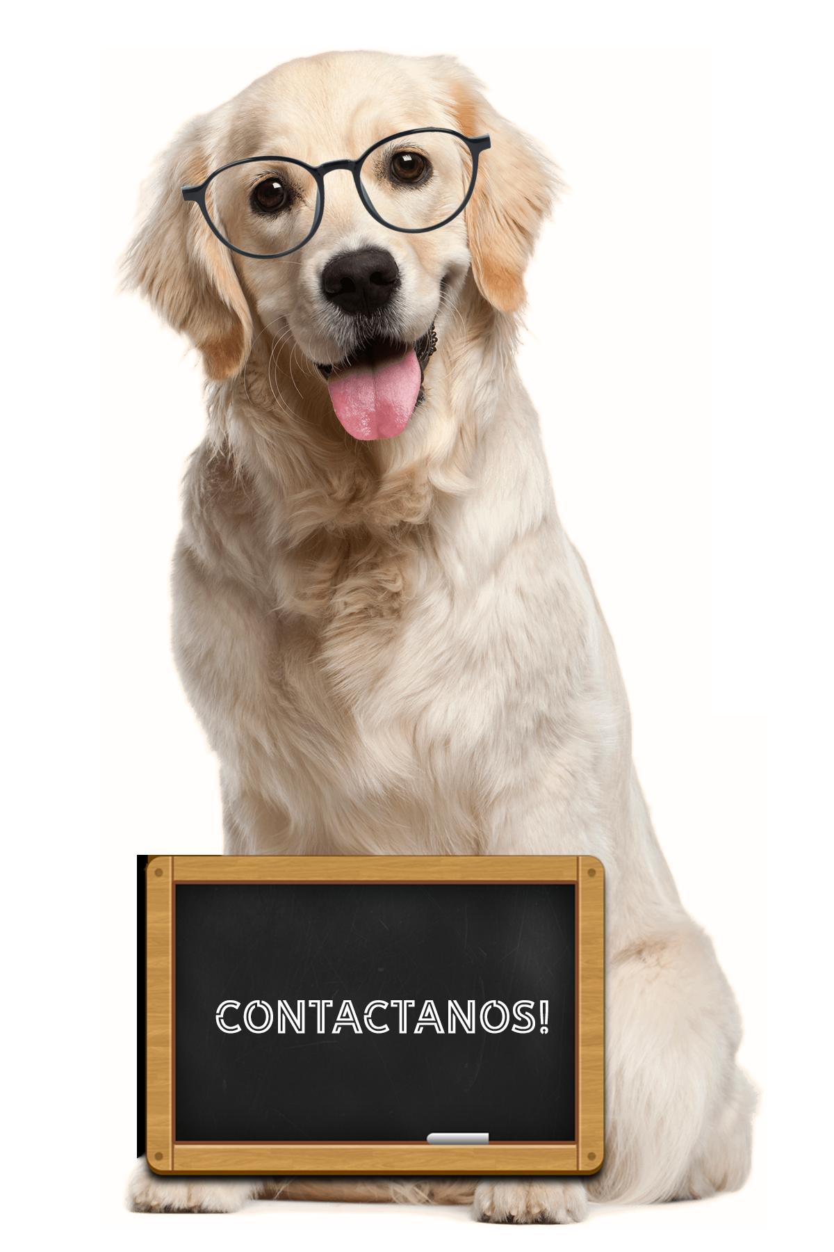 contactanos-nuestros-clientes-labunidos-colombia-productos-para-mascotas-veterinario-agropecuario-pecuarios