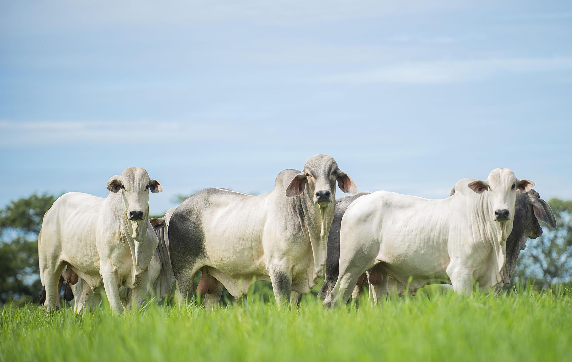 pecuarios-labunidos-veterinario-colombia-vacuno-productos-agroindustria